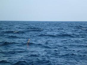 Photo: 上層と下層の潮の流れが違うのか、ウキがナナメに進んでます。