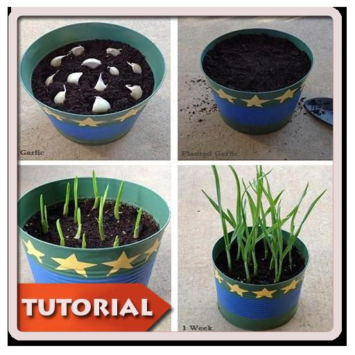 DIY Gardening Planting
