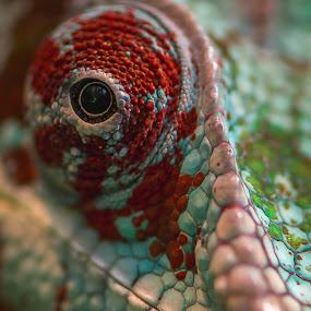 by Mario Guay - Animals Reptiles