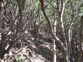 ウバメガシの林に