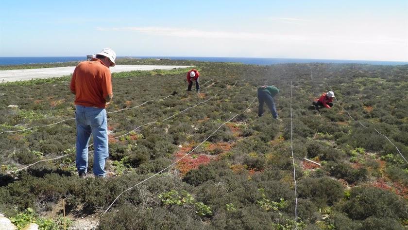 Técnicos de medio ambiente en la isla de Alborán.