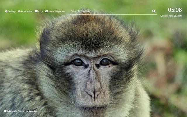 Baby Monkeys Wallpaper Hd Nuevo Tema De