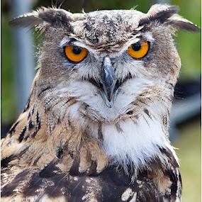 Bright eyes by Andrew Richards - Animals Birds