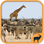 Animals Puzzle Zoo free – games for all ages icon