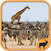Animals Puzzle Zoo free