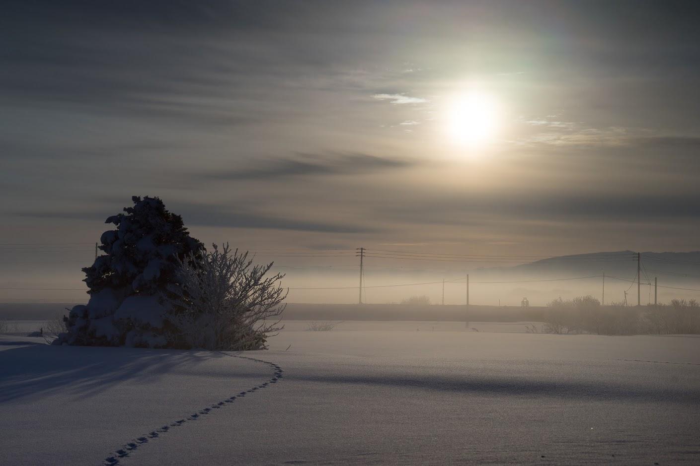 樹木に潜りこむ雪原の足跡