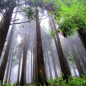 The vertical fantasy  by Sayan Bhattacharya - Landscapes Forests ( nature, places, landscape )