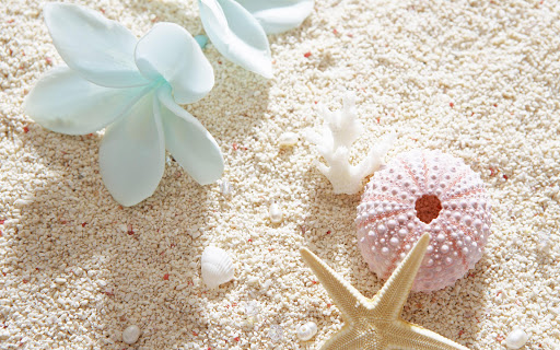 Seashells Live Wallpaper