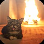 Cat 3D Video Live Wallpaper