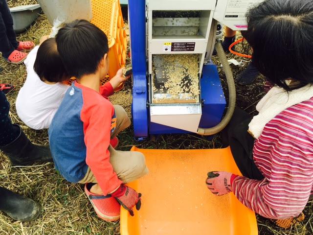 写真中央、お米があります。網の上を流れて、玄米だけ下に落ちます。籾つきは、もう一度籾摺りします。