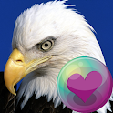 Eagles HD Wallpapers icon