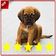 Puppy Training Puppy Perfect icon