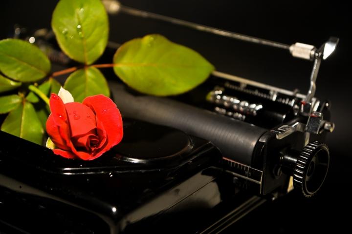 Una Rosa e Una Lettera di MicheleFaggian