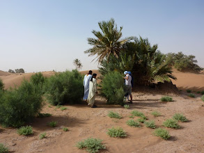 Photo: Some of the planted tamarisk have become quite big within 1 year.