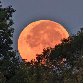 Let The Harvest Begin by Howard Sharper - Landscapes Starscapes ( michigan, moon, riverside, harvest, moonlight )
