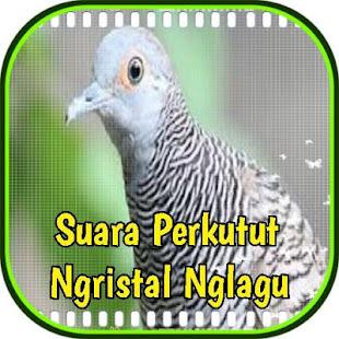 Suara Perkutut Ngristal Nglagu - náhled