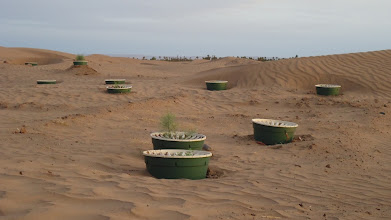 Photo: Groasis Waterboxx's replanted close to Bivouac Le Petit Prince show a very promising sight as the tamarisk grafts grow. March 2011