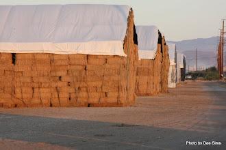 Photo: (Year 3) Day 36 - Hay Bale Storage