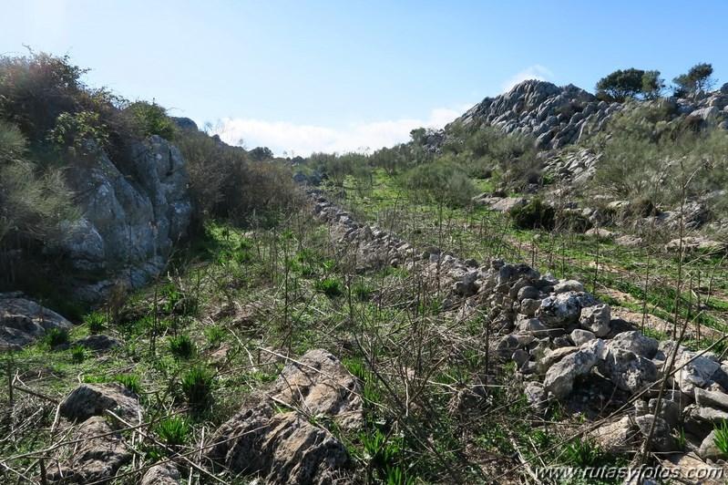 Cornicabral de Mures