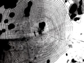 Photo: La géométrie de la toile de l'épeire diadème - Diamètre 20 cm environ. Construite à l'entrée de mon composteur de végétaux. Photo solarisée pour mettre en exergue les fils de soie.