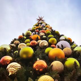 O Christmas Tree by Chris Montcalmo - Public Holidays Christmas ( tree, christmas, holidays, ornaments )
