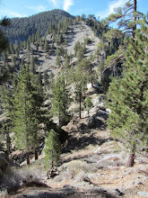 Photo: Looking south up the ridge to Pine Mt. The trail drops130 vertical feet to this saddle then begins a climb of 1,500 vertical feet to Pine Mt.