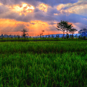 Bondowoso by Darlis Herumurti - Landscapes Sunsets & Sunrises