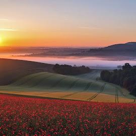Morning Glory by Tim Clifton - Landscapes Sunsets & Sunrises ( sunrise, poppy, countryside, poppies, fields, sun, misty, landscape, poppy flower )