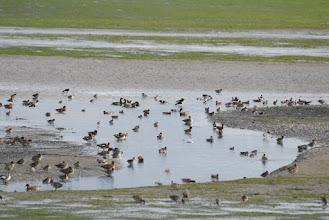 Photo: Birds Assembly