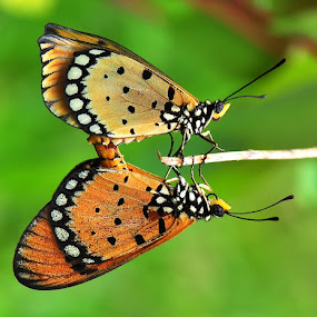 Mirroring Alike by Endra  Dharmalaksana - Animals Insects & Spiders