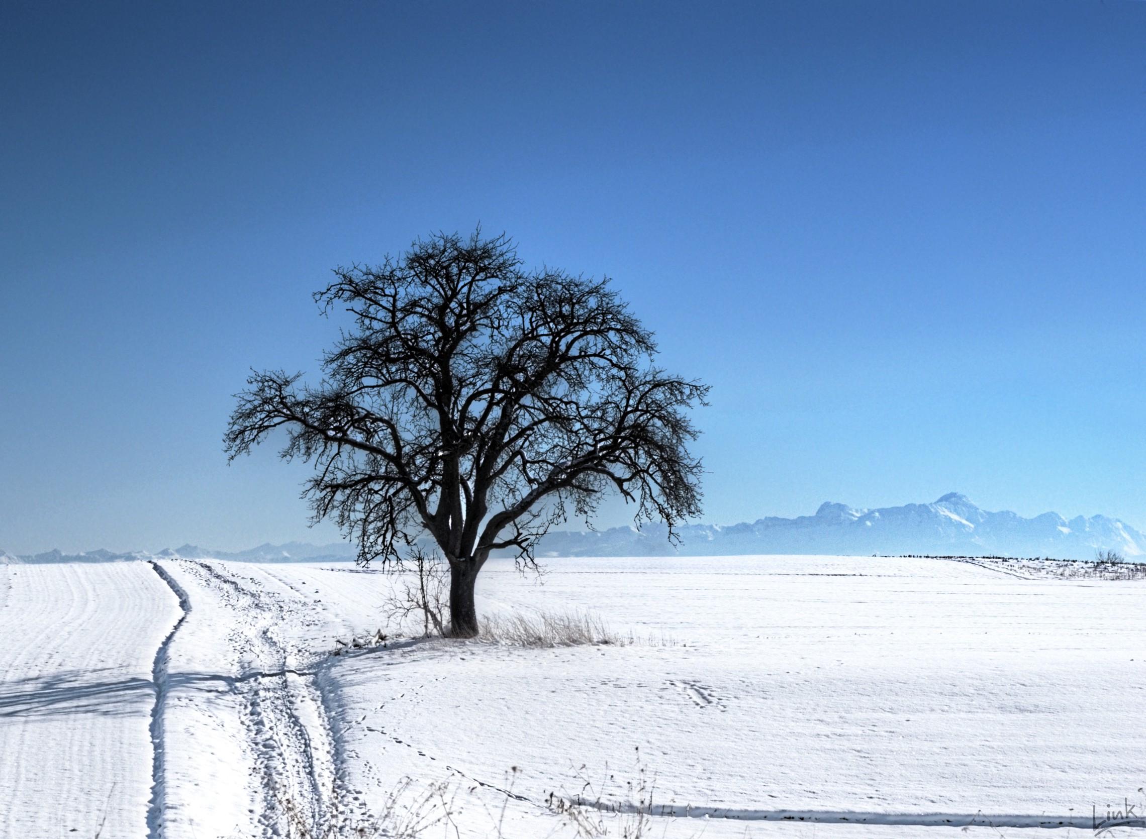 Photo: My favourite photgraphy tree.