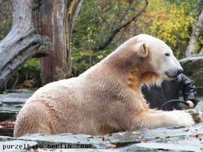 Photo: Knut hat es geschmeckt :-)