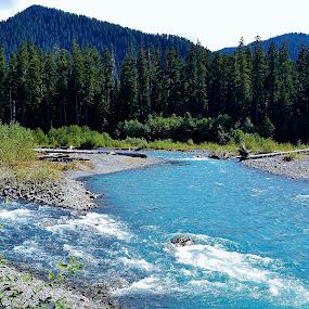 Hoh River-4 by Deanna Matthews - Landscapes Waterscapes ( trees, forest, landscapes, waterscapes, mountains & hills )