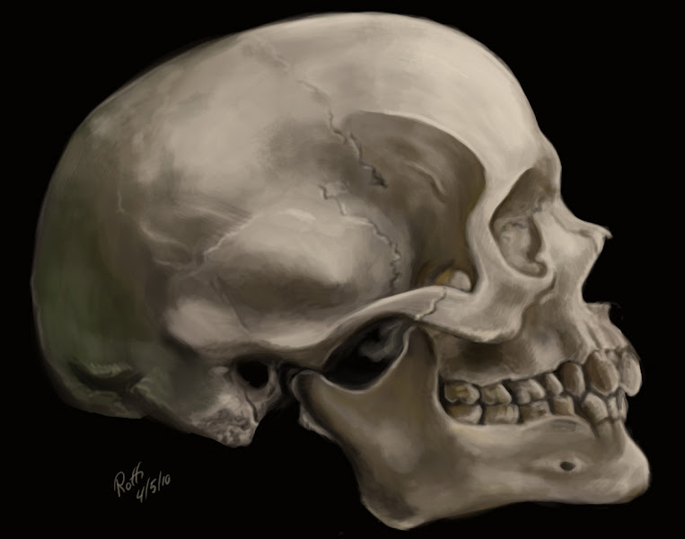 Photo: Since I have been posting stuff from my FB archive today, I might as well add this skull study I did last year. Ok enough with the FB archive posts. You may return to your regularly scheduled stream......