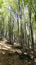 Photo: Rude grimpée dans la forêt