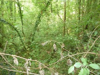 terrain à Chailly-en-Brie (77)