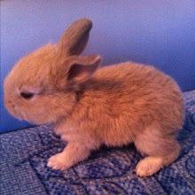 Photo: Cute 3-week bunny #intercer #bunny - via Instagram, http://instagr.am/p/LujgXcpfjN/