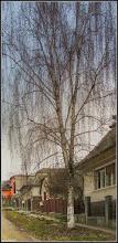 Photo: Turda - Str. Dorobanti, mesteacan - 2018.02.21