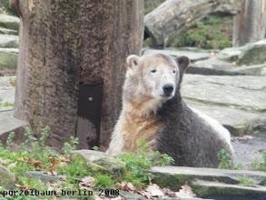 Photo: Knut mit frischem Make Up in der Schlafkuhle ;-)