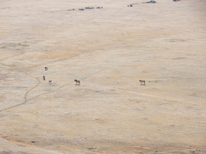 馬とモンゴルの大地