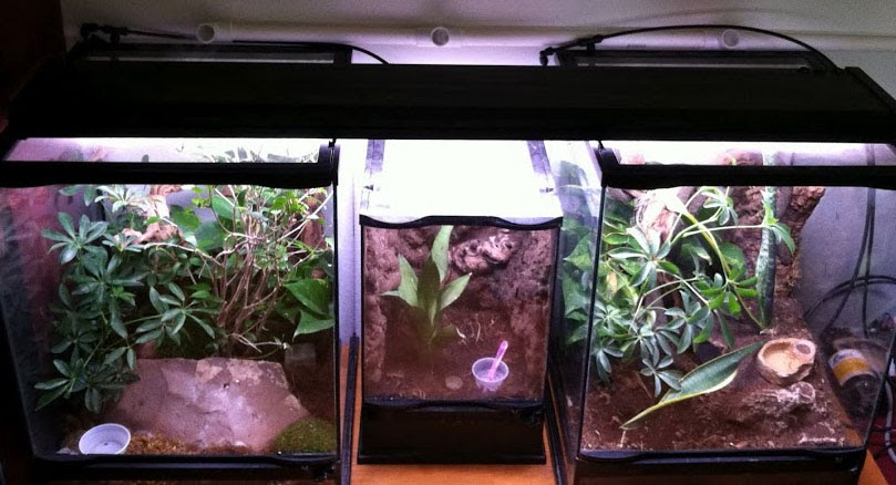 Crested Gecko Terrariums Building A Vivarium Moonvalleyreptiles Com