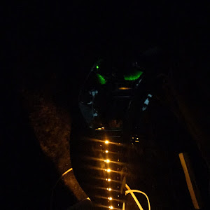 ワゴンRスティングレー MH23S のカスタム事例画像 ayuさんの2019年01月26日20:49の投稿