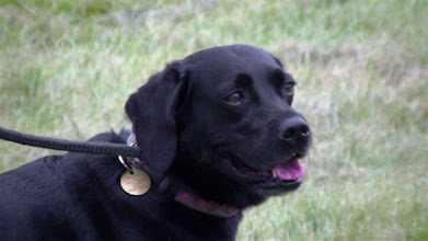 Photo: Maggie-May Lab X