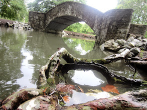 Photo: Root bridge and stone bridge over a pond at Eastwood Park of the Five Rivers Metroparks in Dayton, Ohio.