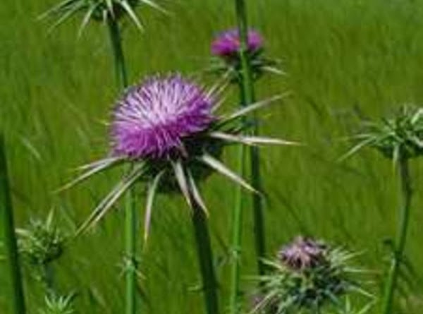 Prevent Cloudy Eyes In Dogs With Milk Thistle Recipe