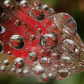 Lost Necklace (detail) by Marija Jilek - Nature Up Close Natural Waterdrops
