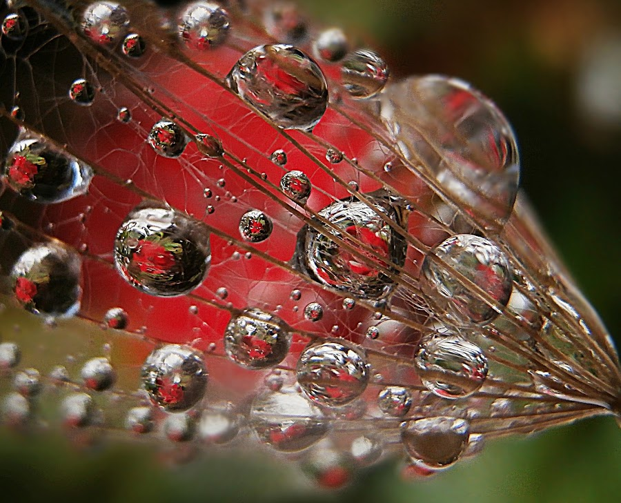 Lost Necklace (detail) by Marija Jilek - Nature Up Close Natural Waterdrops