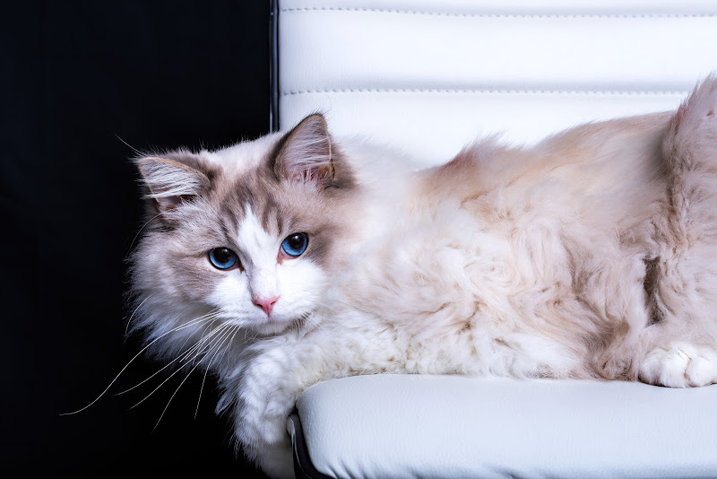 Soft White di marianna_obino