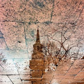 wintry puddle views by Mauri Walton - Uncategorized All Uncategorized