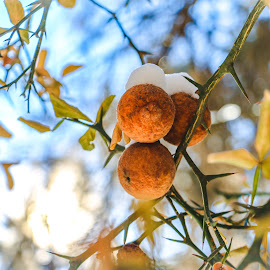 Thorne Apples by Kathy Suttles - Nature Up Close Other plants (  )